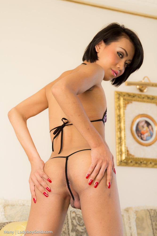 Hot Ladyboy Ass Porn -